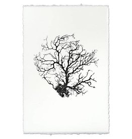 Barloga Studios Black Coral Fan #1 Print