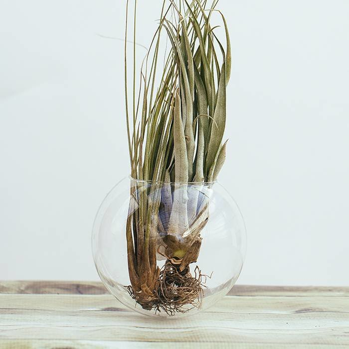Wall Hanging Glass Vase