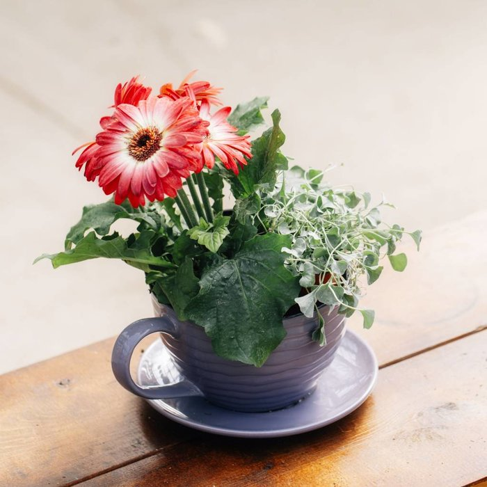 Cup of Love (Sun)