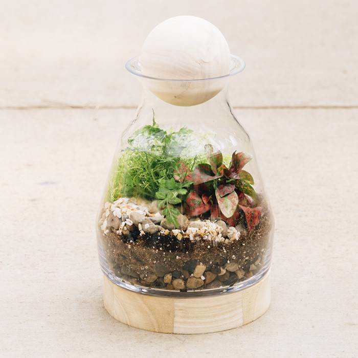 Glass and Wood Terrarium May 29 6:30pm