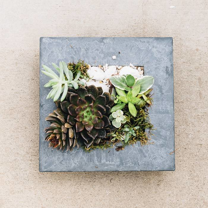 Succulent in Slate (Square) May 24 6:30pm SOLD OUT