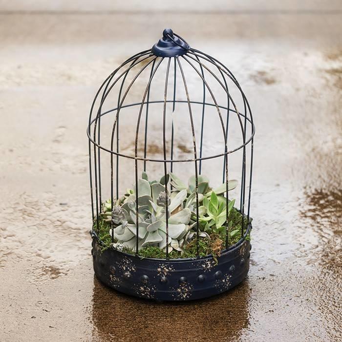 Succulent Bird Cage (Square OR Circle ) June 20