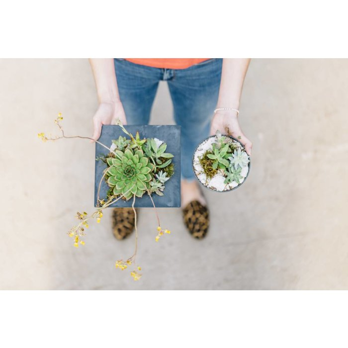 Succulent Slate Duo Planter June 28
