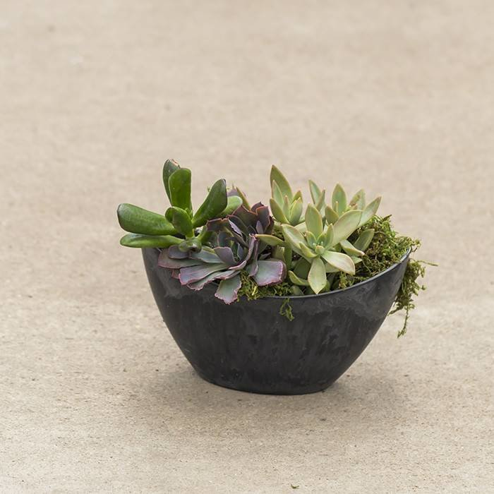Succulent Small Oval Slate August 17