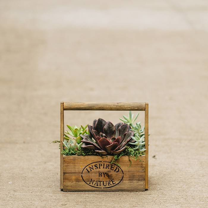 Succulent In Wooden Planter August 24