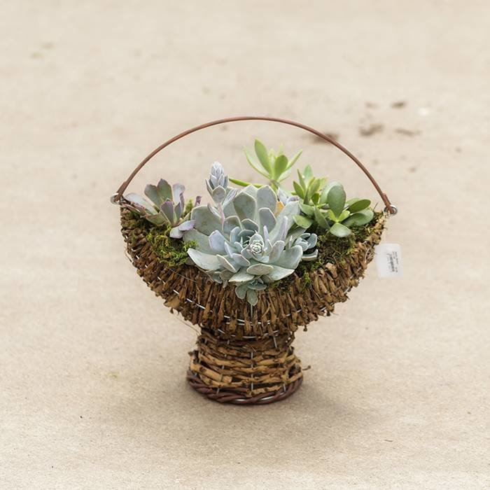 Succulent Basket and Log Planter August 31
