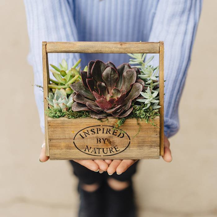 Succulent In Wooden Planter August 24