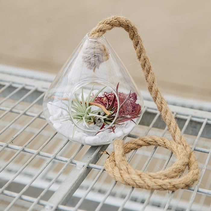 Glass Hanging Air Plant Sept 28 6:30p.m.