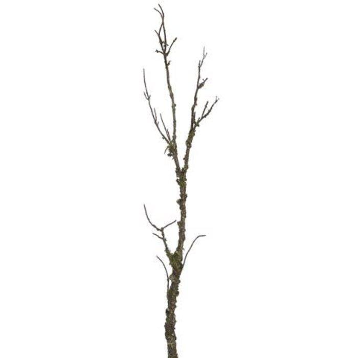 """Mossy Branch 45"""""""