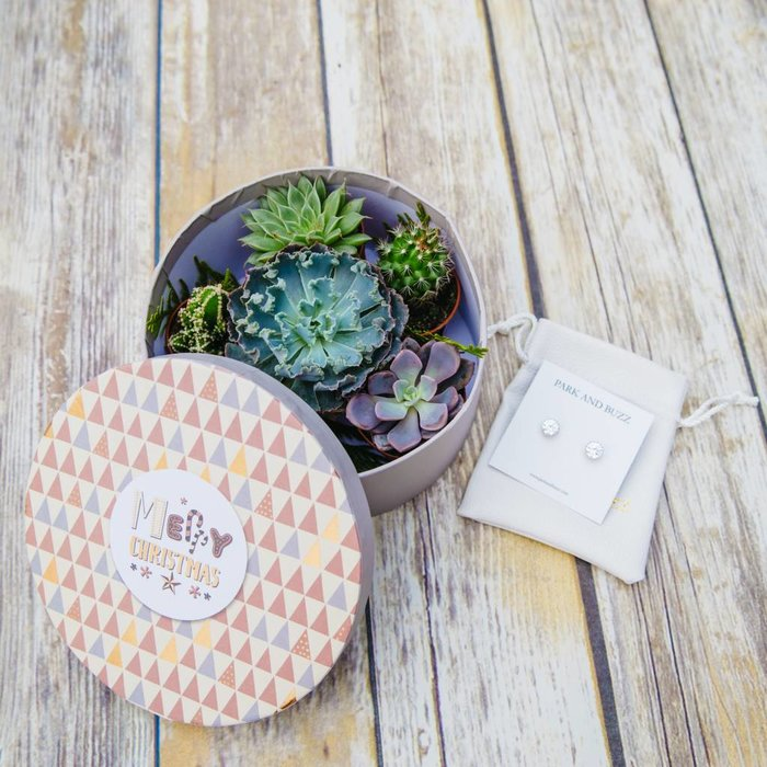 Succulent Gift Box Medium