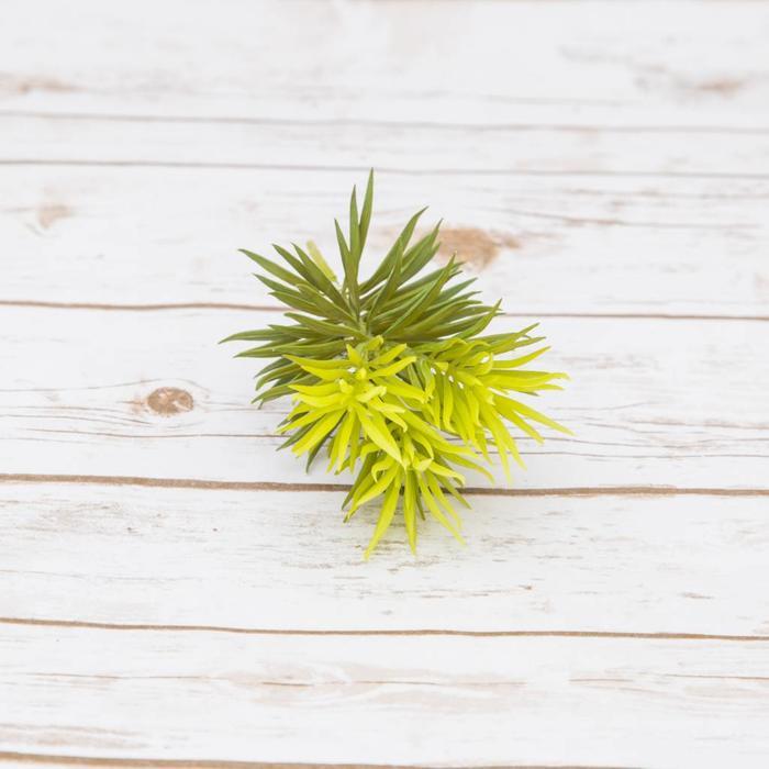 Pine Needles 10cm x 18cm