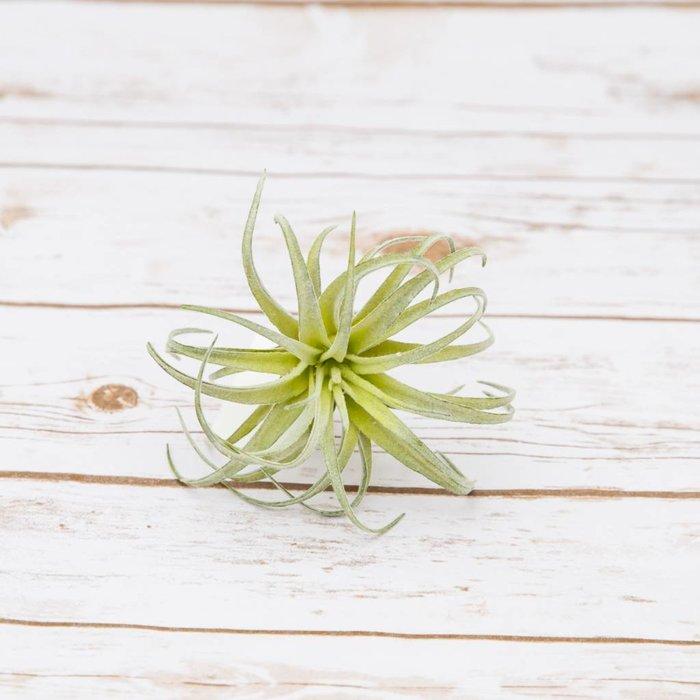 Grass 17cm x 10cm