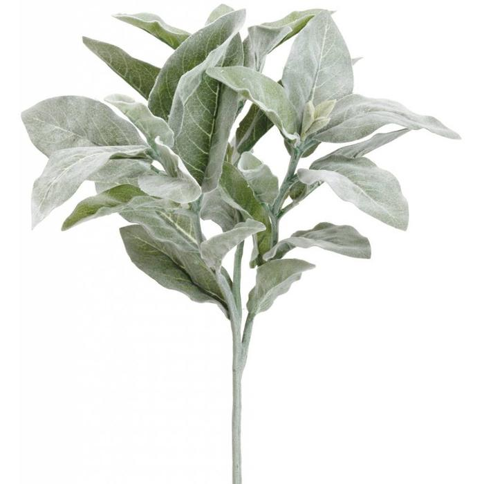 Lamb's Ear Spray 16""