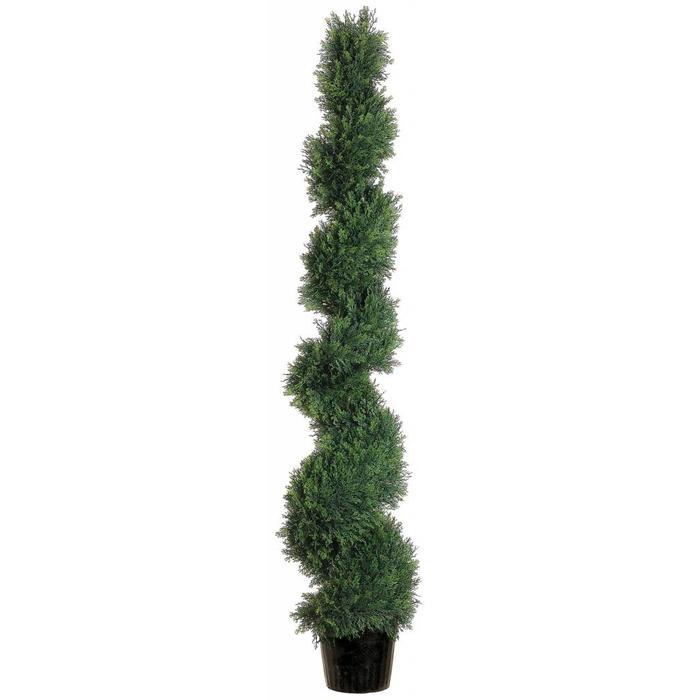 Spiral Cedar Topiary 5'