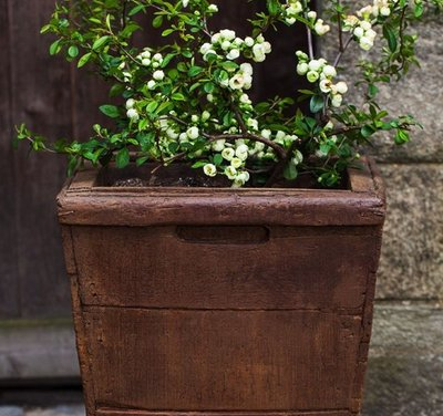 Cast Stone Tall Vendange Planter