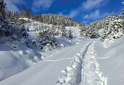 Top Lake Tahoe Cross Country Ski & Snowshoe Trails for