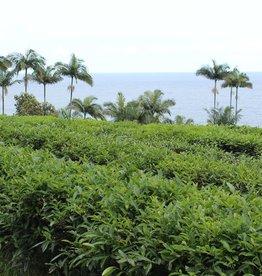 Service Tea Cupping / Tasting Onomea Tea Company June 21, 2018