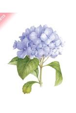 Tattly Blue Hydrangea (Scented) Tattoo