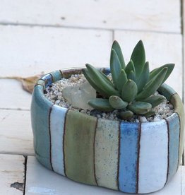 Studio HB 2:  Plants 'n Pots