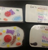 Animal and Plant Cell Construction Kit