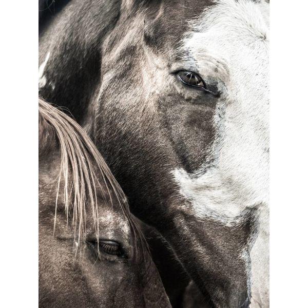 Horse Study II (#3)