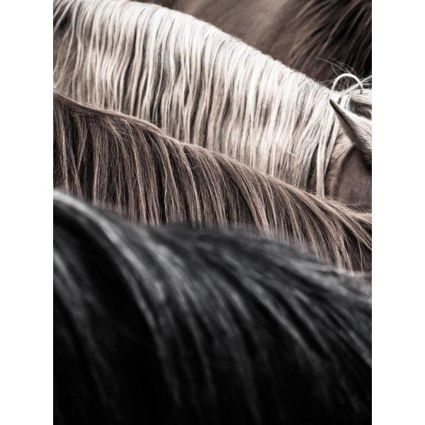 Horse Study II (#5)  *Sold*