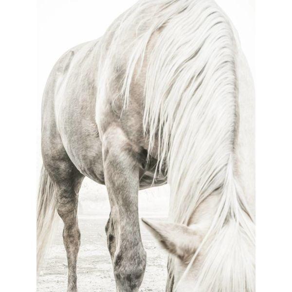 Horse Study II (#6)
