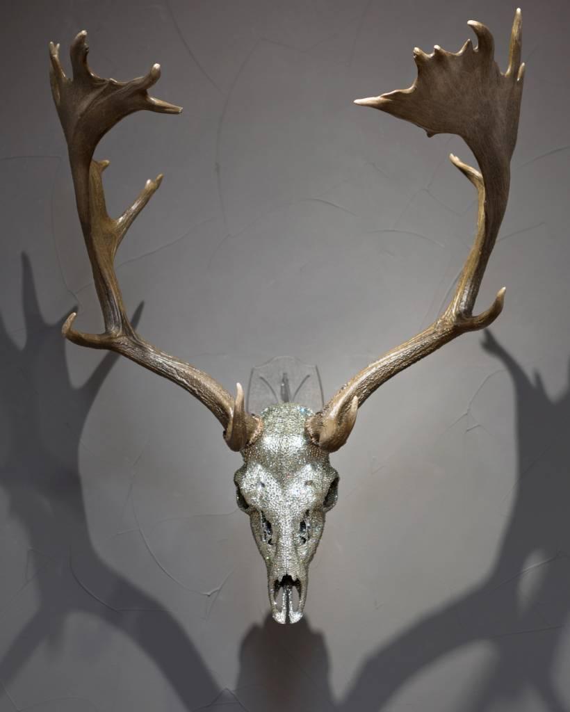 Fallow Deer Mount