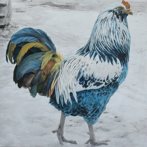 jenny gummersall blue white rooster in the snow slate gray gallery