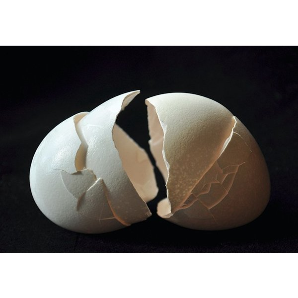 TWO EGGS FACING (309)