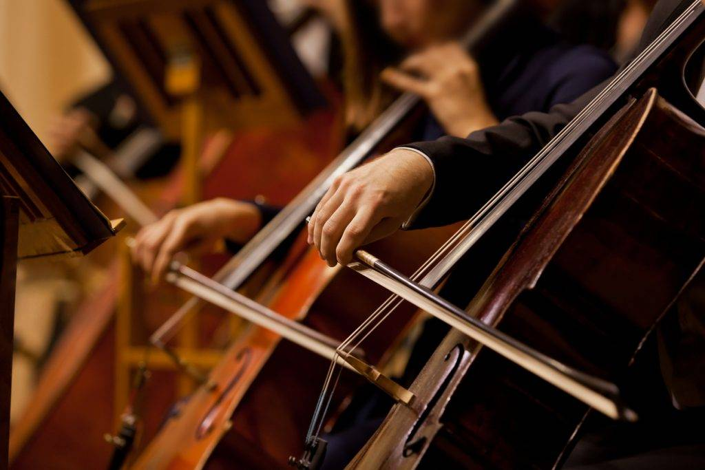 Cello - String Bass Shopping Guide