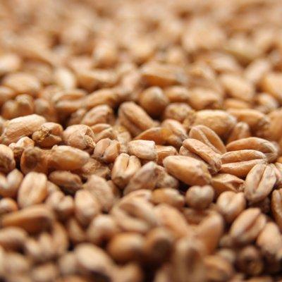 Weyermann Weyermann Oak Smoked Wheat