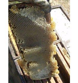 Honey Per Lb (Bulk)