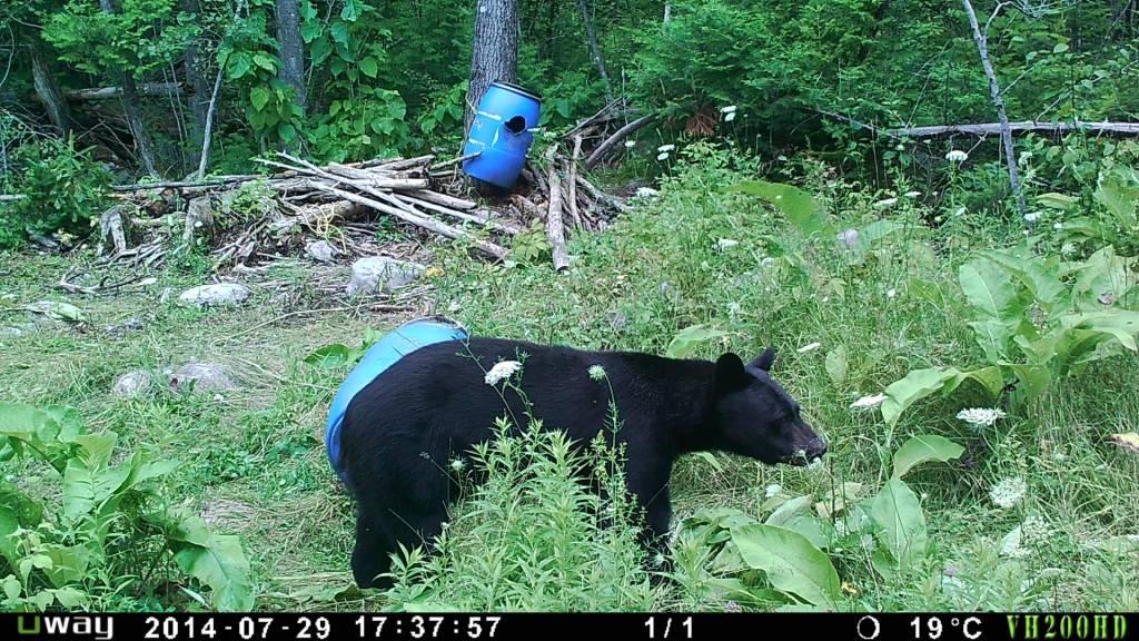 Rack Stacker Popcorn Bear slop