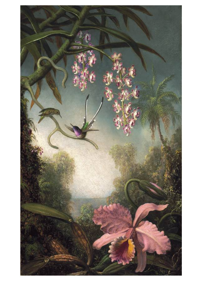 Hummingbirds: Martin Johnson Heade Notecard Folio Boxed Notecard