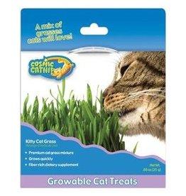 Cosmic Kitty Cat Grass