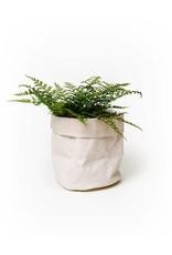 Uashmama Pale Khaki Paper Bag Planter