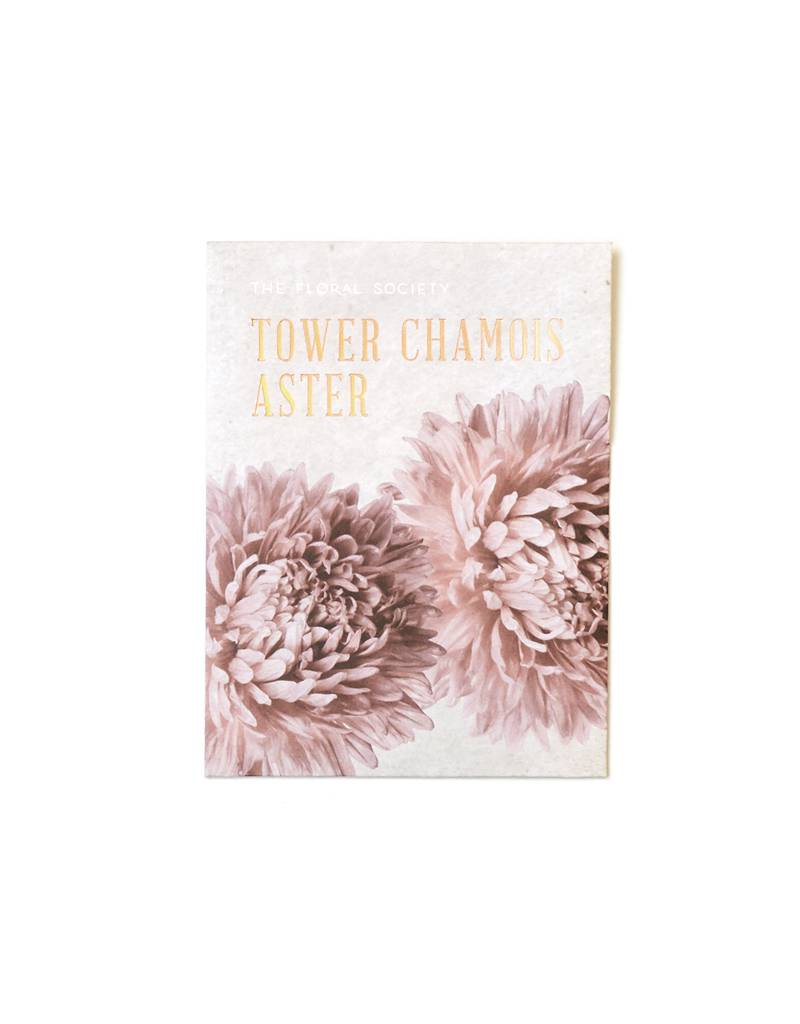 The Floral Society Tower Chamois Aster Seeds