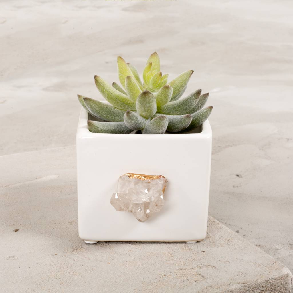 Dani Barbe Quartz Succulent Planter in White
