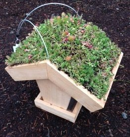 Living Roof Bird Feeder - planted