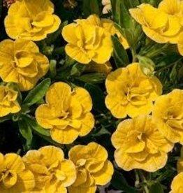 Calibrachoa 'Double Yellow'