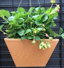Strawberry Basket Square