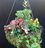 Hanging Garden 7