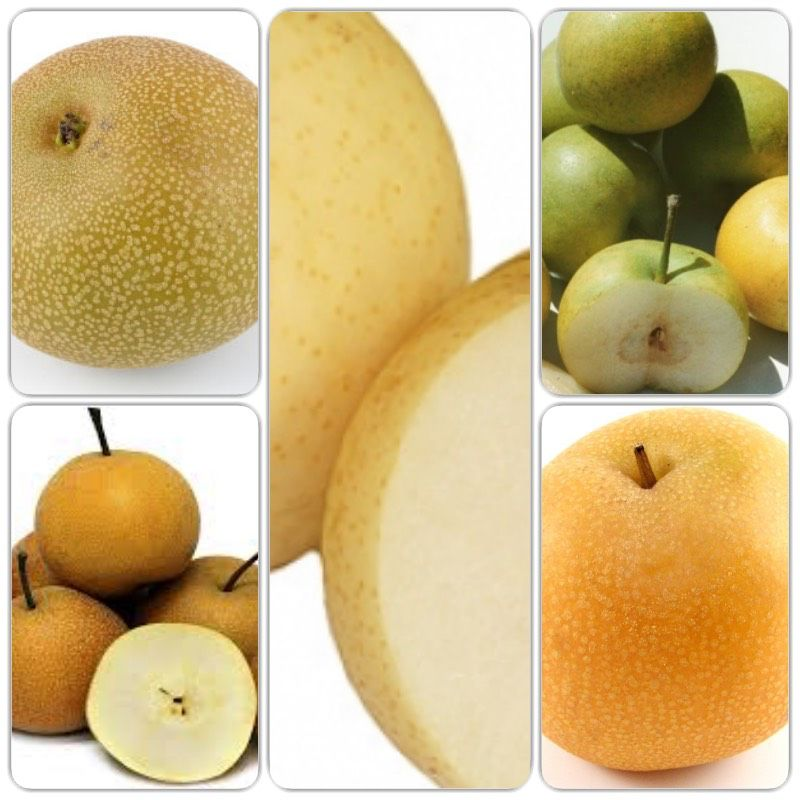Pear Dwarf - Asian 5 Way Combination Pre-Order