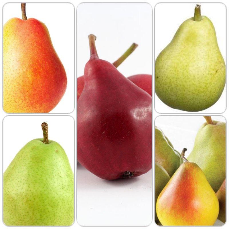 Pear Dwarf - 5 Way Combination Pre-Order