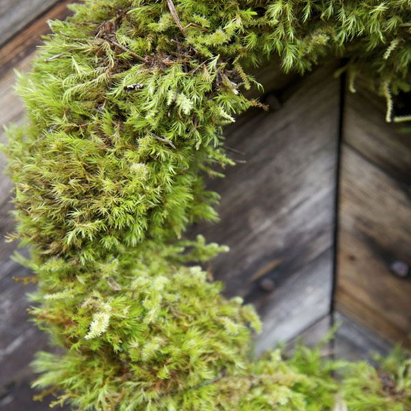 October 29th, <br /> Moss Wreath