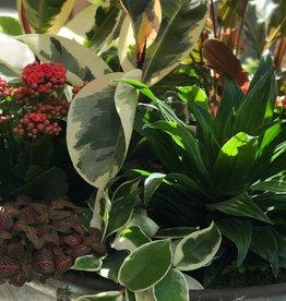 January 14th, Houseplant Basket