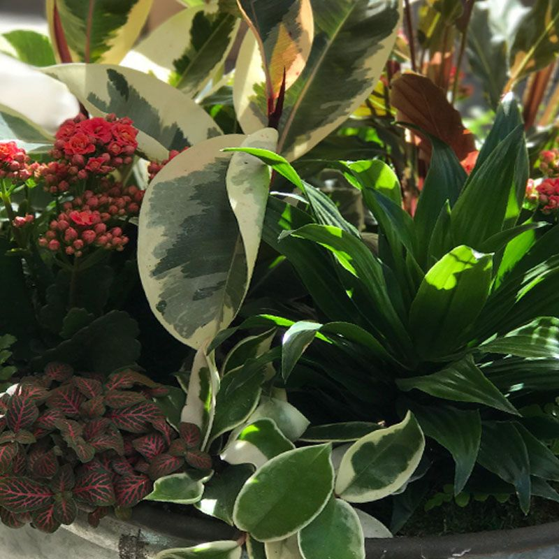 January 14th, Houseplant Basket