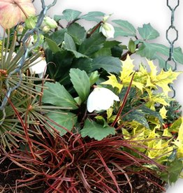 January 21st, Winter Hanging Basket