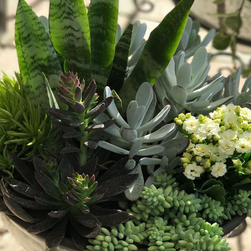 January 28th,  Houseplant Containers